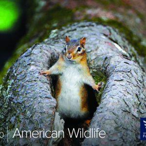 AMERICAN WILDLIFE WALL CALENDAR